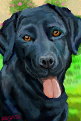 Black Lab by roses56