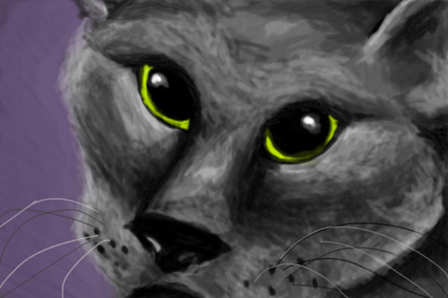 grey cat on a purple background by nedeeb
