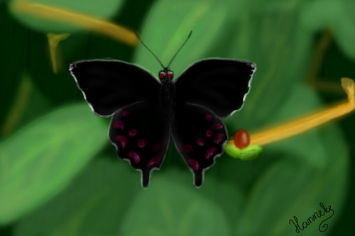 Parides Photinus by Hanneke