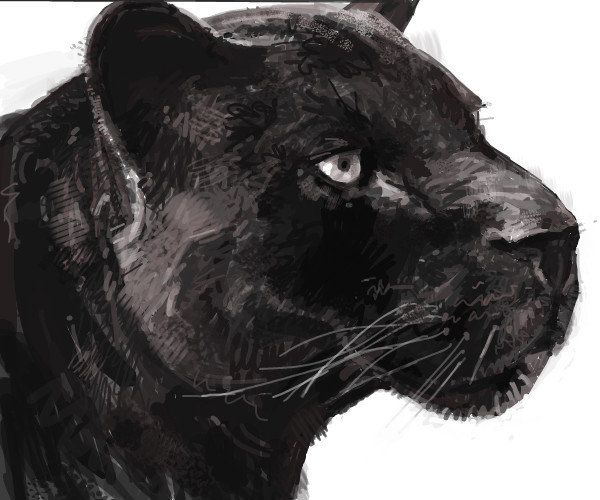 black-leopard-bones-an