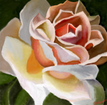 creamy-orange-rose