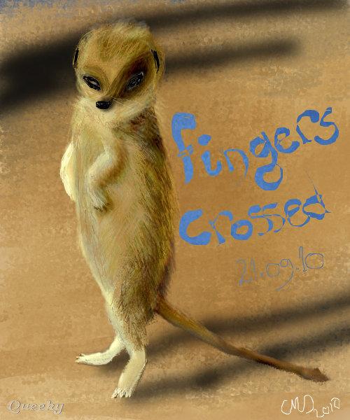 meerkat good luck � an animals speedpaint drawing by wungu