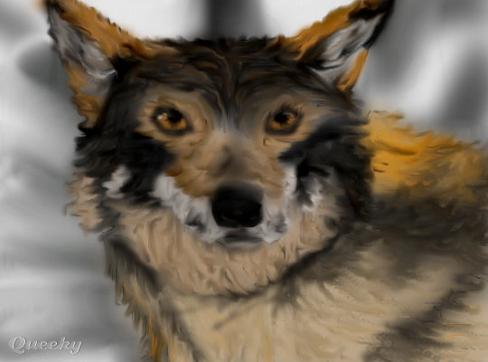 Red Wolf An Animals Speedpaint Drawing By Themersisters