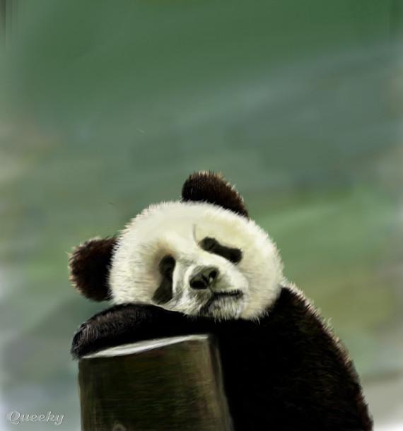 Sleepy Panda An Animals Speedpaint Drawing By Sonia55