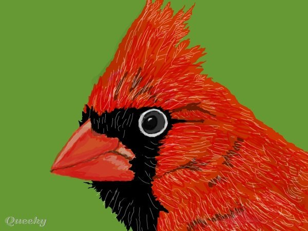 how to draw a red cardinal