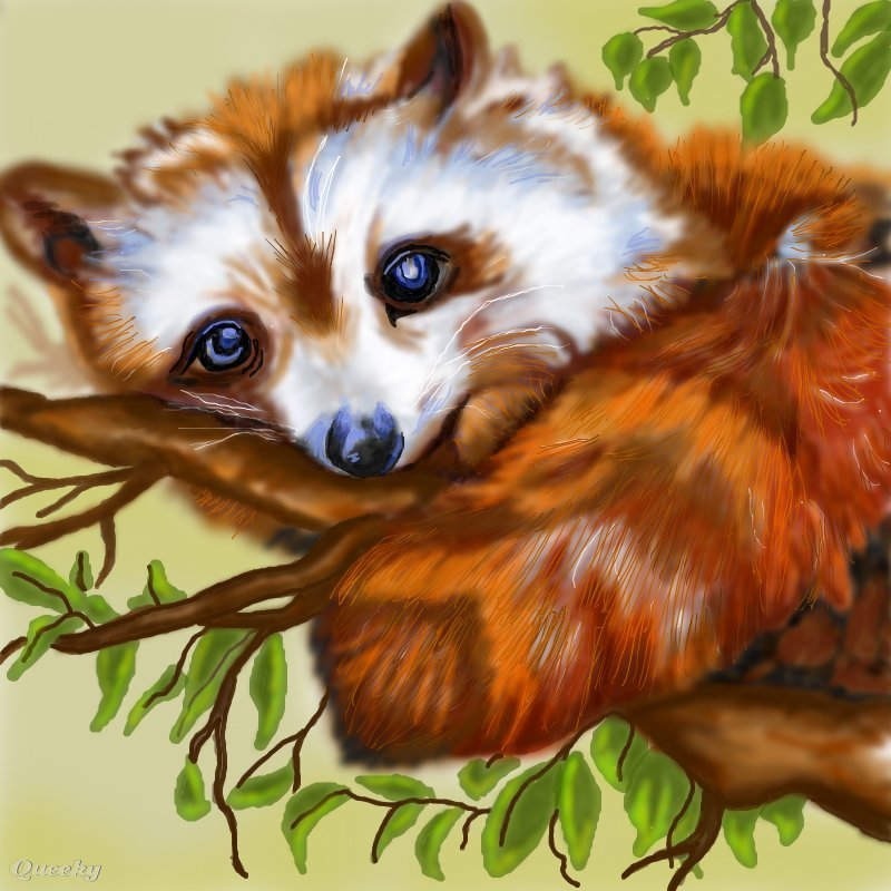 red raccoon  u2190 an animals speedpaint drawing by kutedymples