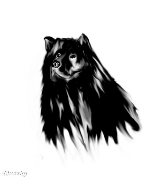 BLACK CHOW CHOW ← an animals drawing by Bizzybee . Queeky - draw ...