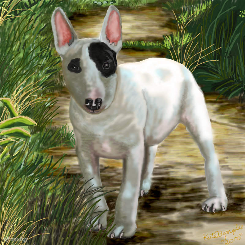 English bull terrier drawings for English terrier
