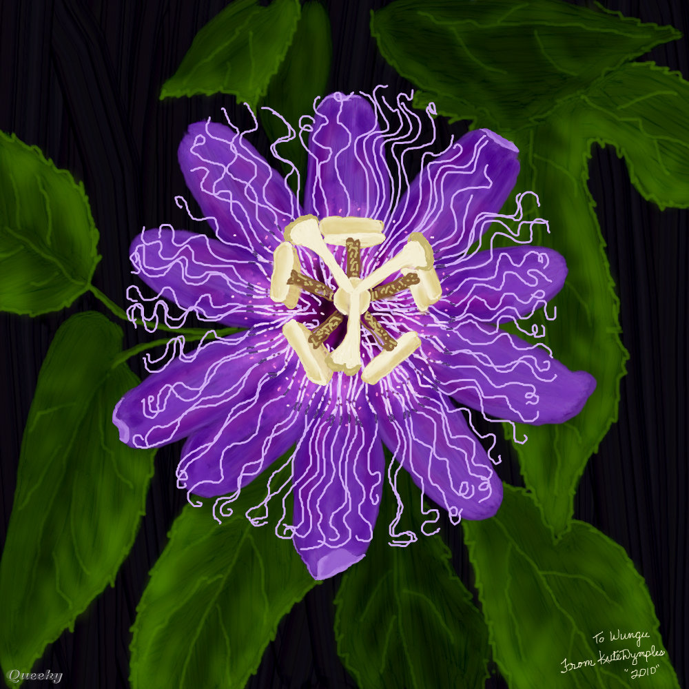 Purple Passion Flower ← A Ornamental Speedpaint Drawing By