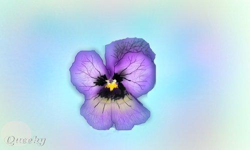 violet study  u2190 a plants speedpaint drawing by jokkio