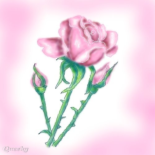 Pink Rose Drawing Pink Rose and Buds ←...