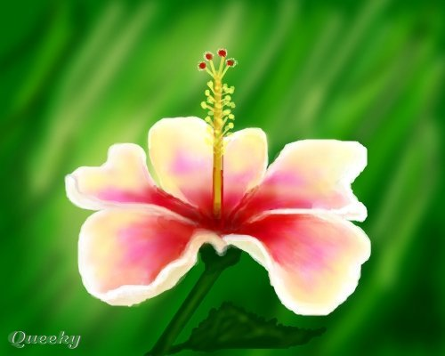 Hibiscus rosasine a plants drawing by Nela alen Queeky draw online