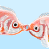 Kissing fish I drew on the Happy Fish site
