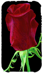 My Rose Entry for the I Pad Challenge