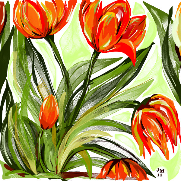 how to draw ophin tulips
