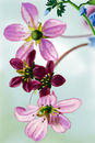 dangling-pink-flowers