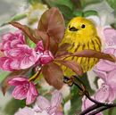 yellow-bird-pink-flowe