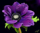 the-purple-flower